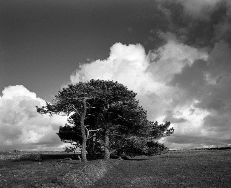 The Big Sky The Big Trees, Archival Silver Gelatin print, edition 20, 40X50 cm, 2012