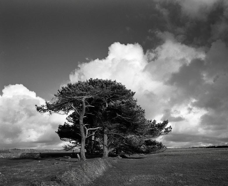 The Big Sky The Big Trees, Archival Silver Gelatin print, edition 20, 40X50 cm, 2012