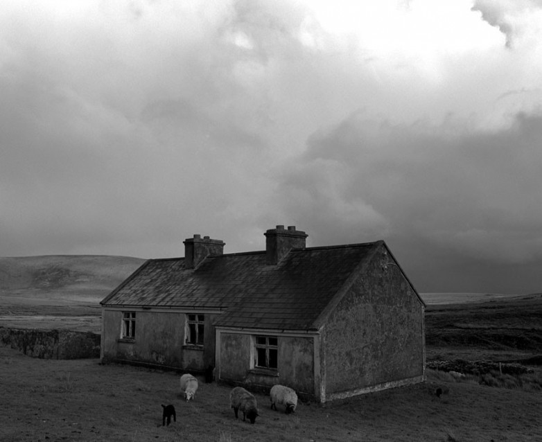 The Big Sky Abandoned House with Black Lamb, Archival Silver Gelatin print, edition 20, 40X50 cm, 2012