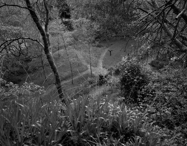 Patrick Mason, Garden, Wicklow 1 Patrick Mason, Garden, Wicklow 1